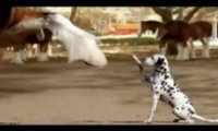 Koń i pies