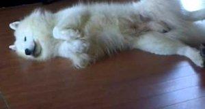 Sadystyczny kotek