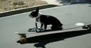 Kompilacja psich porażek