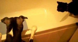 Pies zrobił psikusa kotu
