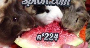 Le Zap de Spi0n n°224