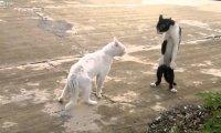 Gdy dwa koty nie mogą się dogadać