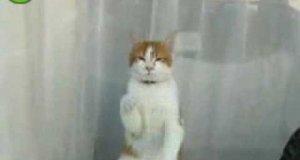 Kot czyściciel