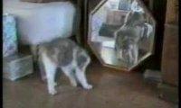 Koty raz jeszcze