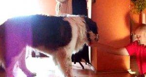 Maniek boi się schodów