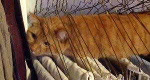 Koty, które utknęły