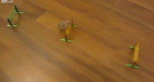 Superinteligentna myszka
