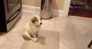 Piesek uczy się łapać