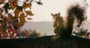 Atak zabójczych wiewiórek [+18]