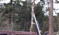 Epicka wycinka drzewa