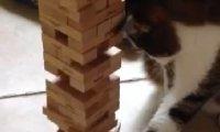 Kot gra w Jengę