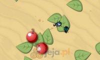 Hodowla chrząszczy