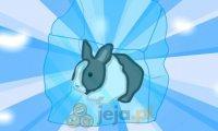 Ocal królika: Wersja świąteczna