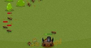 Wojna robaków