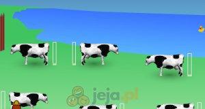 Wydój krowę