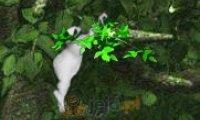 Skoki w dżungli