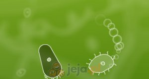 Mikro organizmy
