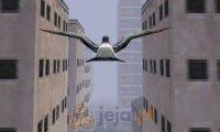 Gołąb w mieście