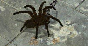 Straszny pająk