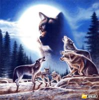 Gang wilków