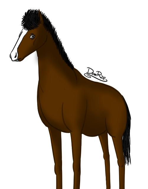Zdjęcie użytkownika Diego_Island w temacie Koń 🐎