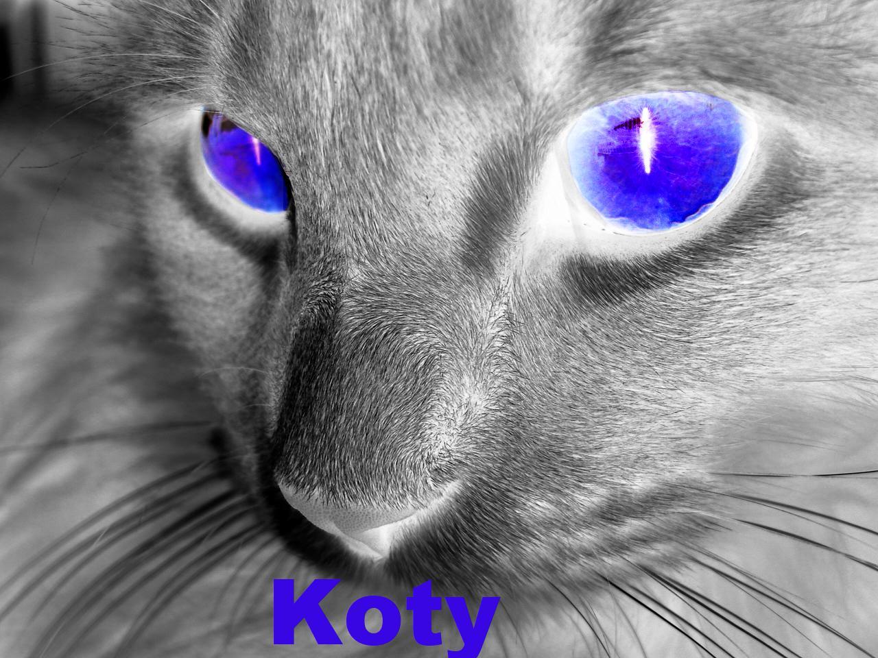 Zdjęcie użytkownika Koteczek_21 w temacie Konkurs na nowe logo grupy