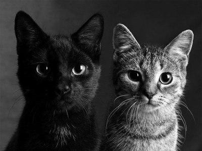 Zdjęcie użytkownika Kwiatuszkowa w temacie Zdjęcia wydr, kotów, fretek oraz żyraf