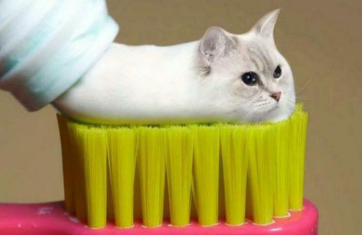Zdjęcie użytkownika Jejak4627 w temacie Zdjęcia kotów