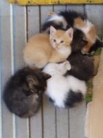 Zdjęcie użytkownika mkiuytfdsxcvbnk w temacie Zdjęcia kotów