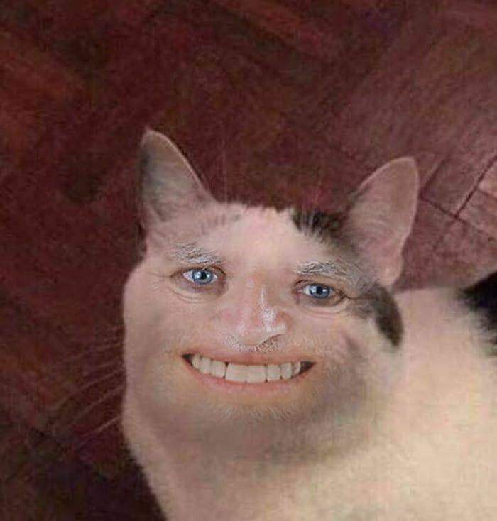 Zdjęcie użytkownika Transformer_fan w temacie Zdjęcia kotów