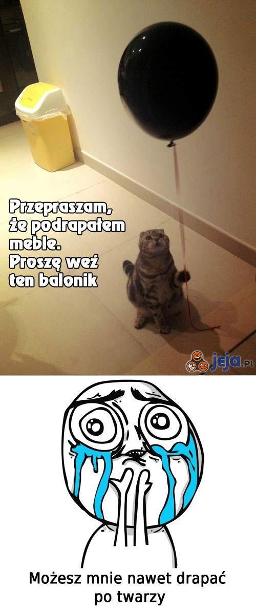 Przeprosiny kotka