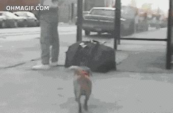 Wytresowany złodziej