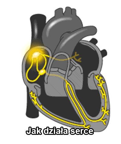 Jak działa serce