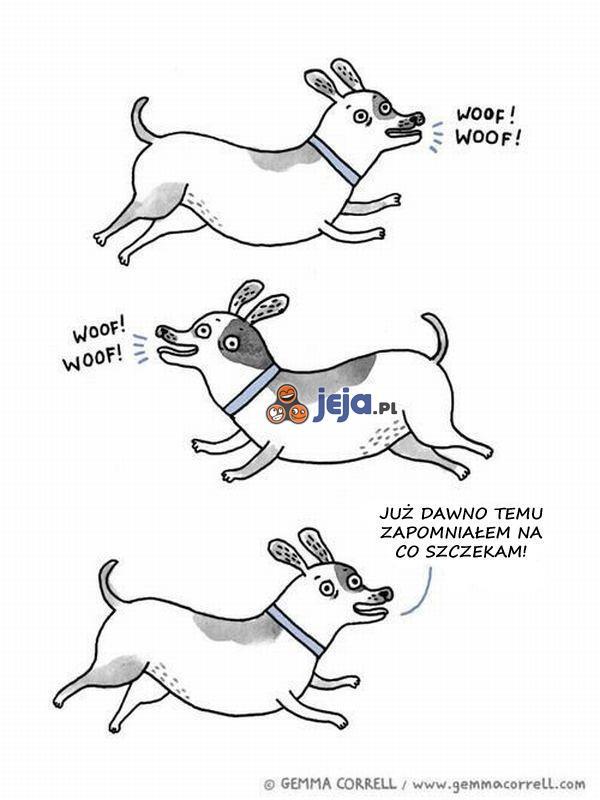 Jak to jest z tymi psami...