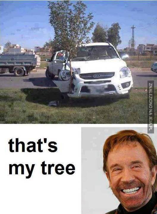 Chuck Norris zasadził drzewko