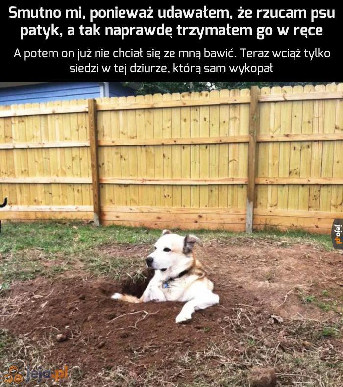 Ten pies już nigdy nikomu nie zaufa