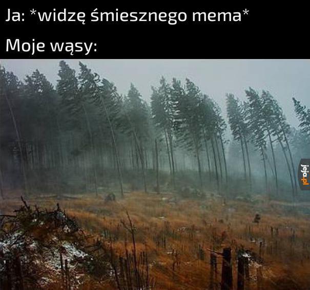 Powiew wiatru