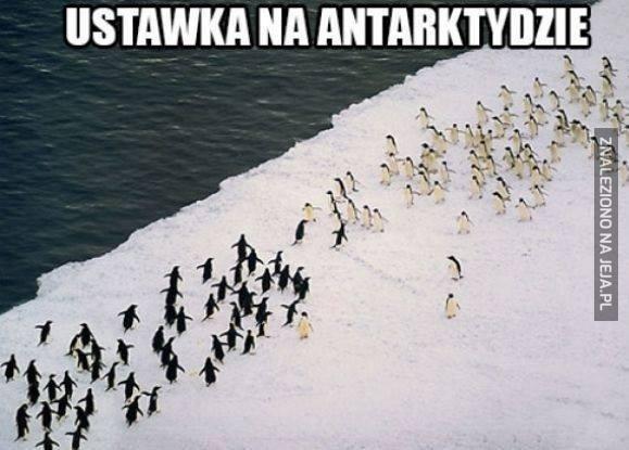 Ustawka na Antarktydzie