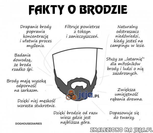 Fakty o brodzie