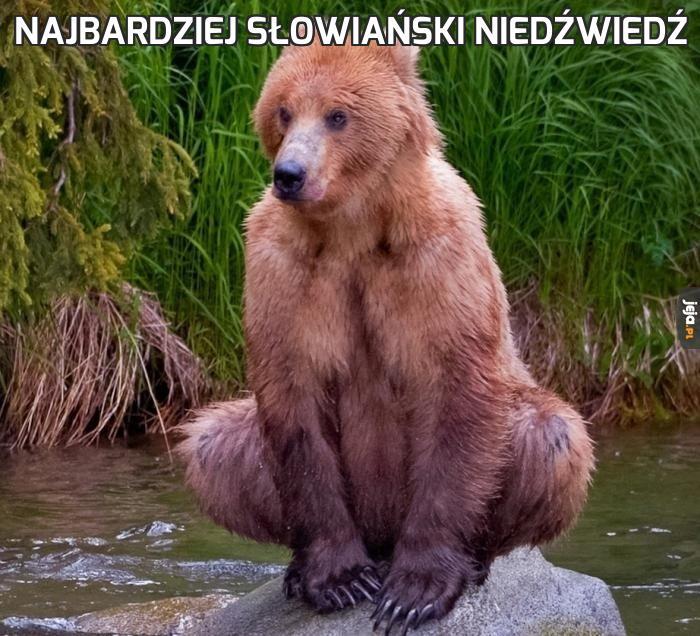 Najbardziej słowiański niedźwiedź