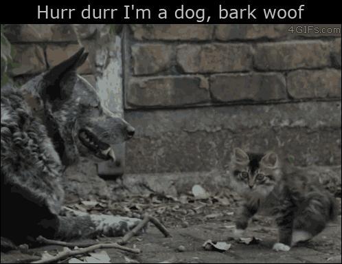 Hau hau jestem psem!