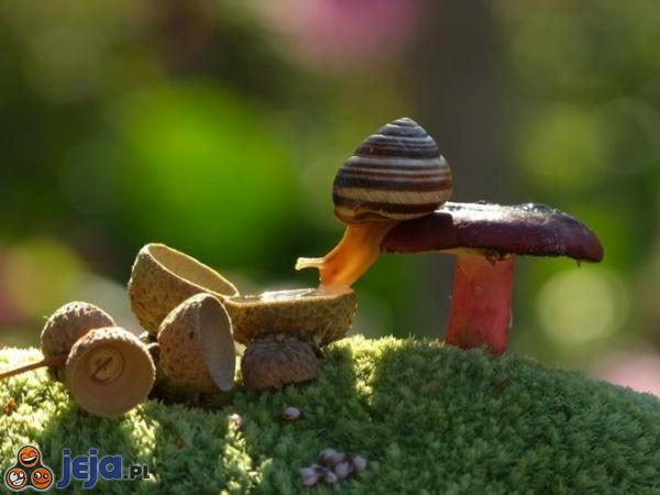 Wodopój ślimaka