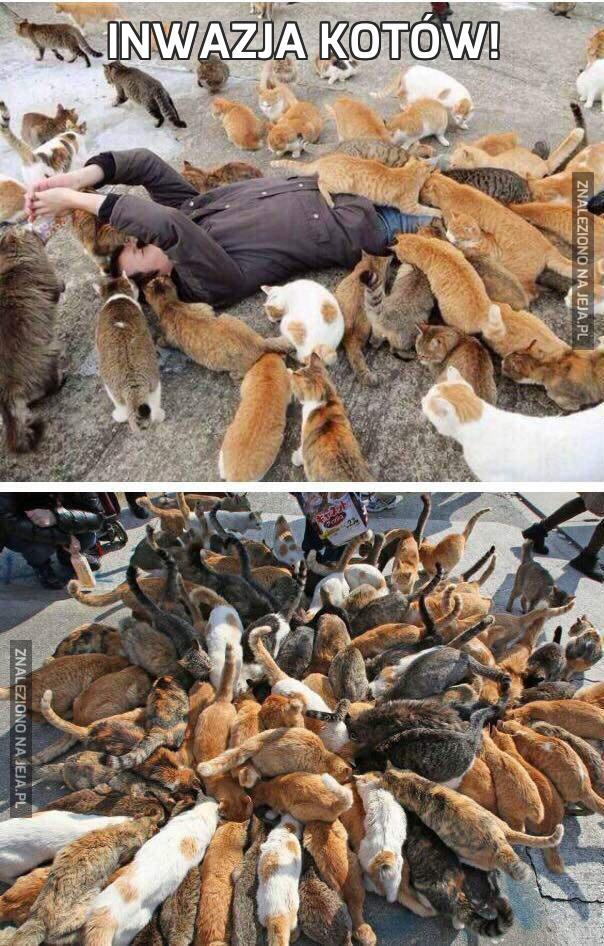 Inwazja kotów!