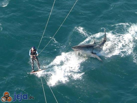 Cudem uniknął ataku rekina