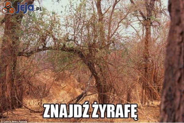 Znajdź żyrafę