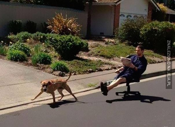 Na spacerku z psem
