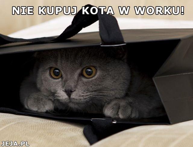 Nie kupuj kota w worku!