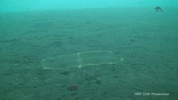 Ocean skrywa dziwne istoty