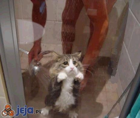 Uwięziony kotek