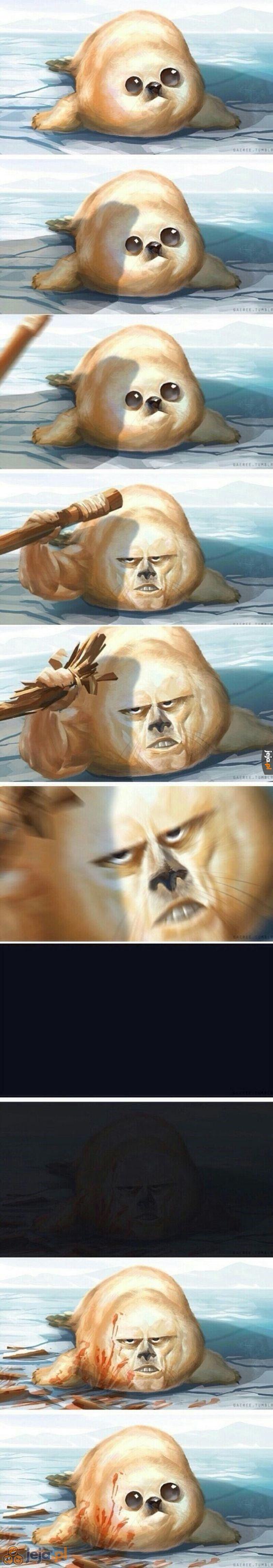Słodka foka
